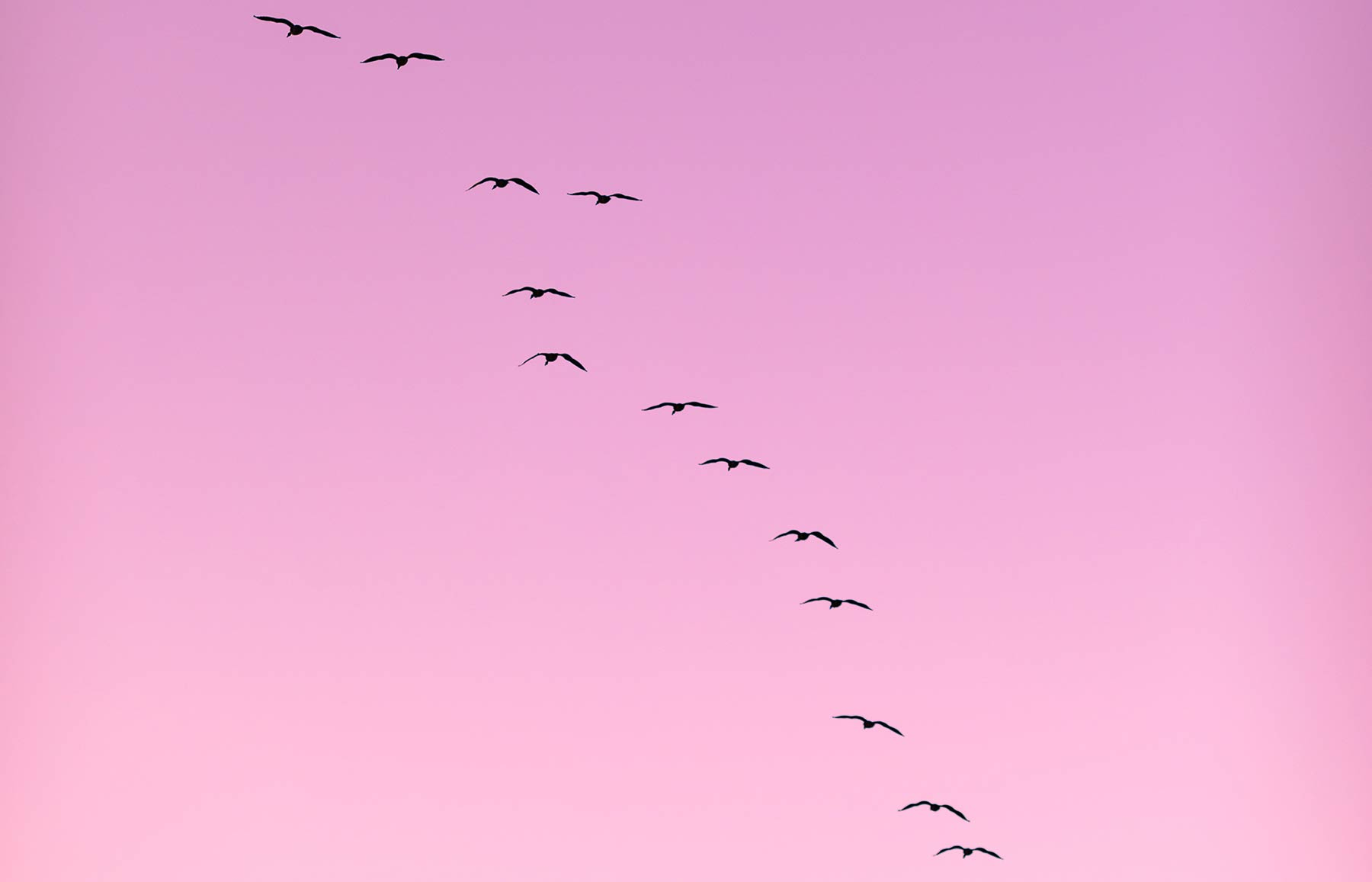 Migration patterns of birds explained